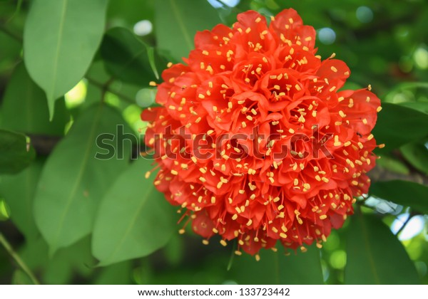 Red flower in the shape of the ball