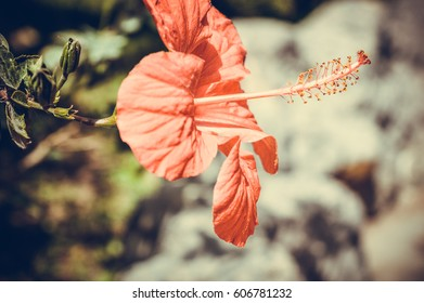 red flower in sunny day background