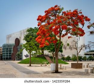 Red flower tree at Habima  square  in  Tel Aviv, Israel.