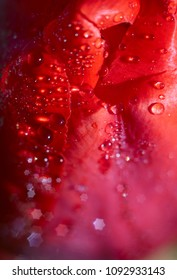 red flower tulip. fine beautiful shiny dew on a flower in the morning light. view from above . beautiful flower