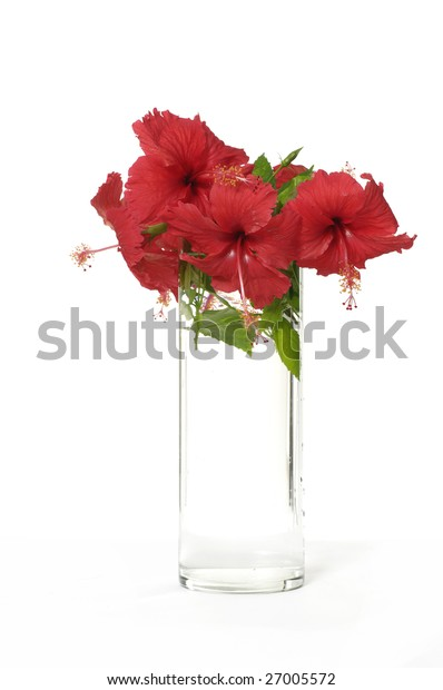 red flower in vase isolated