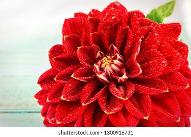 Red flower with water drops . macro. place for text