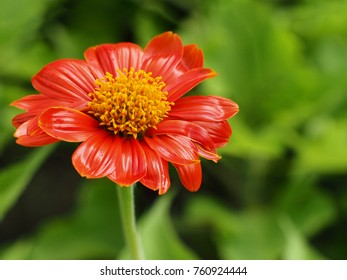 Red Flower yellow