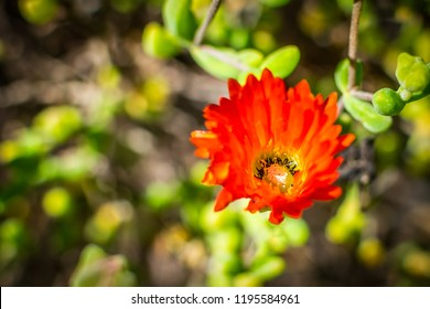 Yellow flower with red center images stock photos vectors red flower with yellow center mightylinksfo