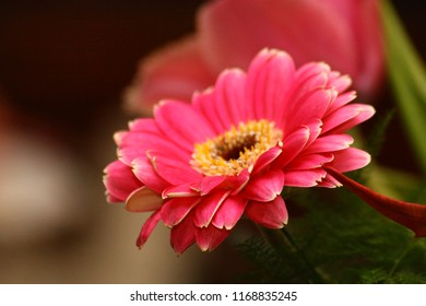 Yellow flower with red center images stock photos vectors red flower with yellow center focus on red flower mightylinksfo