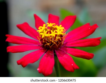 red flower with yellow middle