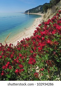 red flowering, monte conero, adriatic sea, marches, italy
