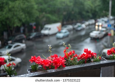 red flowers in a basket on the balcony overlooking the street. rainy day