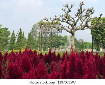 Red flowers in the beautiful Nusantara Flower Garden, Puncak West Java Indonesia