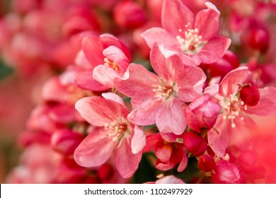 Red flowers blossom on tree. Nature floral background
