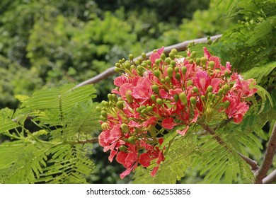 Red flowers are blossoming and growing in nature, a shrub with green leaves branching out.