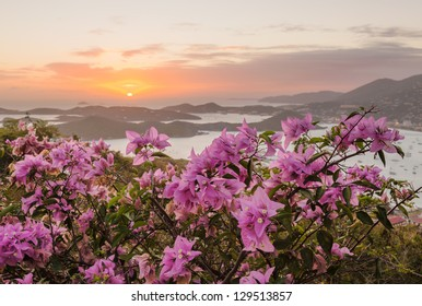 Red flowers frame the sunset over the islands in harbor of Charlotte Amalie St Thomas USVI