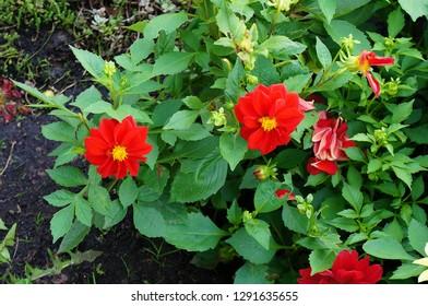 Red flowers in garden