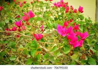 red flowers in garedn