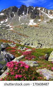 Red flowers and granite boulders in front of distant mountains