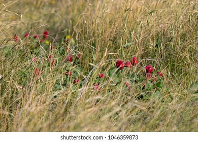Red Flowers and grass