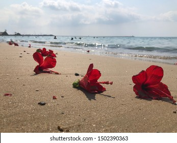 Red flowers of hibiscus lie on the sandy beach against blurred sea waves at the background