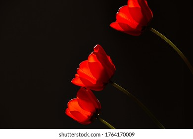 red flowers light black background