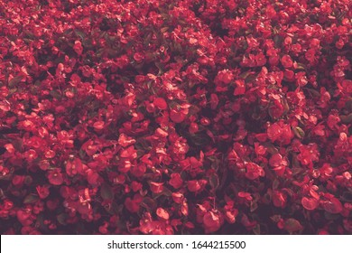 Red flowers with matte effect, floral background
