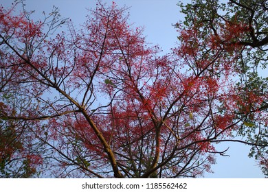 Red flowers on branches against blue background