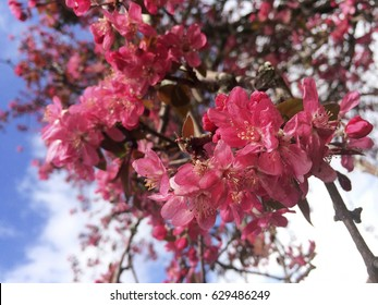 Red flowers on the tree at springtime