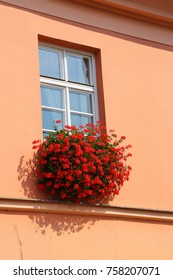 red flowers on the wall of a building under the window