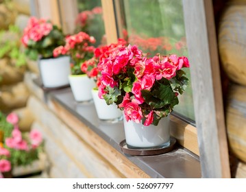 red flowers in pots on the windowsill