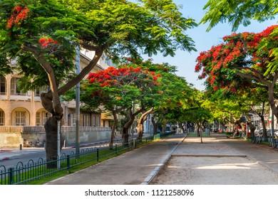 Red flowers trees at Rothschild boulevard  in Tel Aviv, Israel.