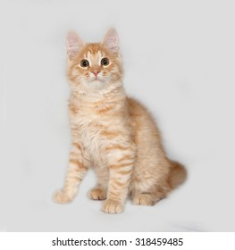 Red fluffy kitten sitting on gray background