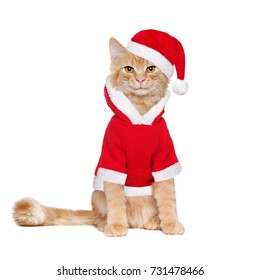 Red fluffy kitten wearing santa claus outfit