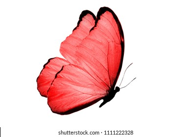 red flying butterfly. isolated on white background
