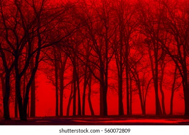 Red fog in the winter trees