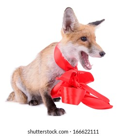 red fox with a bow. New Year or Christmas. animal isolated on white background