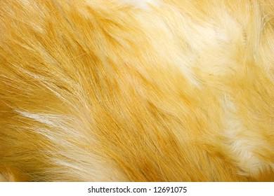 Red fox fur background texture