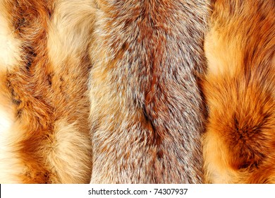Red fox fur with pied beautiful hairs