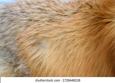 Red fox pattern design. Real fur Skin texture. Animal print pattern tile background