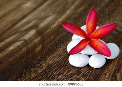 Red frangipani flower with white massage rock on wooden floor