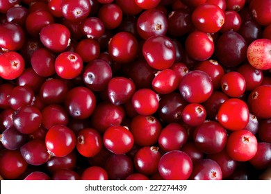 Red fresh cranberries background, close up