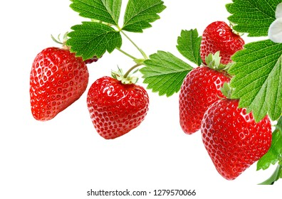 red fresh strawberry