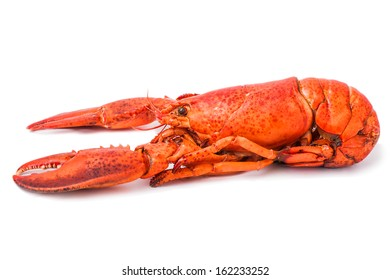 Red freshness lobster isolated on white background