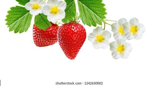 red freshness raw tasty strawberries