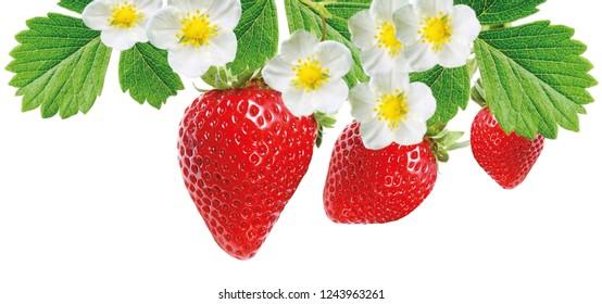 red freshness ripe strawberries
