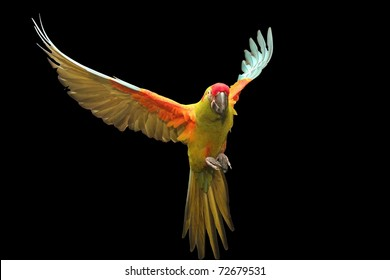 Red Fronted Macaw flying # nine