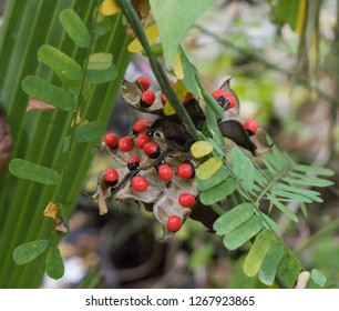 red fruit in jungel