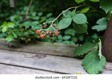 red fruits on green bush