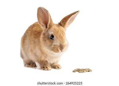 Red furry easter bunny gald for chow on isolated white background