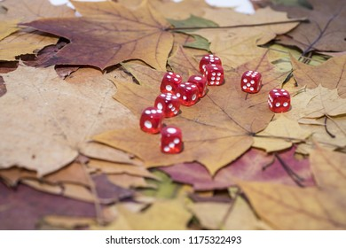 Red game Dice on autumn maple leaves.  Autumn abstraction.