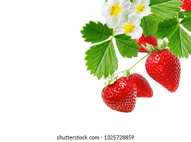 red garden fresh strawberry