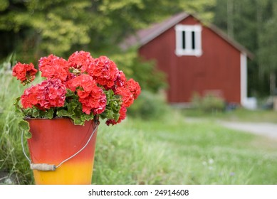 red geranium in bucket against Finnish country