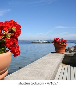 Red Geraniums and Ferry